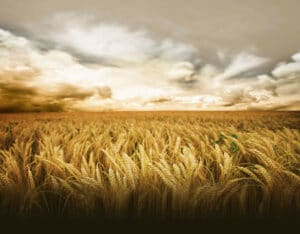17 Obstacles to Recruiting Agribusinesses Talent -