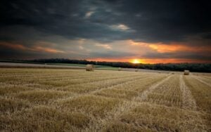 What's keeping agribusiness owners awake at night? -