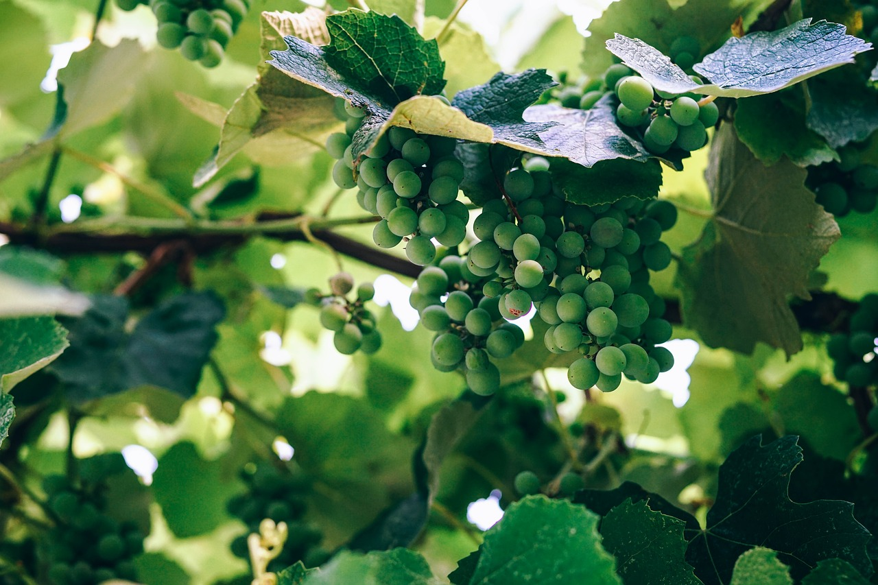 Wine Industry Shows Strong Resurgence