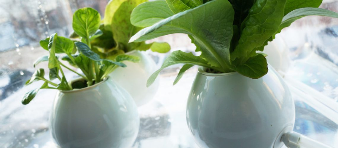 Hydroponics - Agribusiness Recruiting - Agricultural Appointments